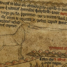 Fig. 4 Hereford Unicorn or Monoceros https://www.themappamundi.co.uk/mappa-mundi/